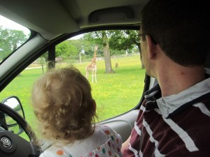 Courtesy of Tesco vouchers, we all went to Longleat Safari Park with my aunt.  Kaylah enjoyed a front row seat to see all the animals.