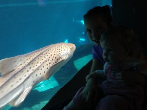 After we left the Val di Fassa, we went to stay with friends in the NW part of Italy.  They were so gracious to us! One day, we all went to the acquarium in Genoa.