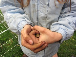 As part of our gardening experience, we found a little frog!