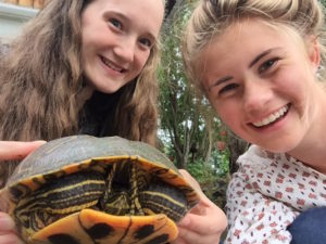 Anne and Hannah bizarrely came across this turtle near Anne's house!