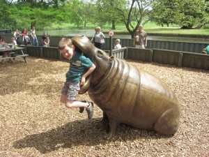 How he wedged himself in the hippo's mouth, I don't know!